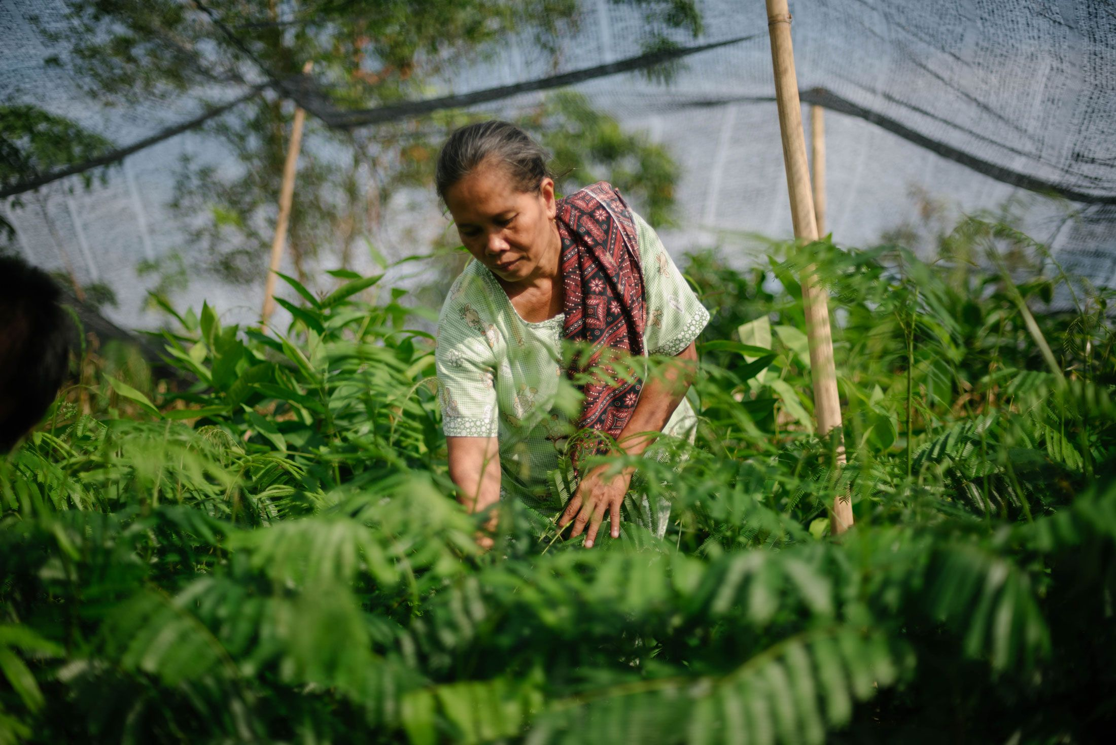 Photo of one of our tree planting partners in Indonesia, caring for small trees
