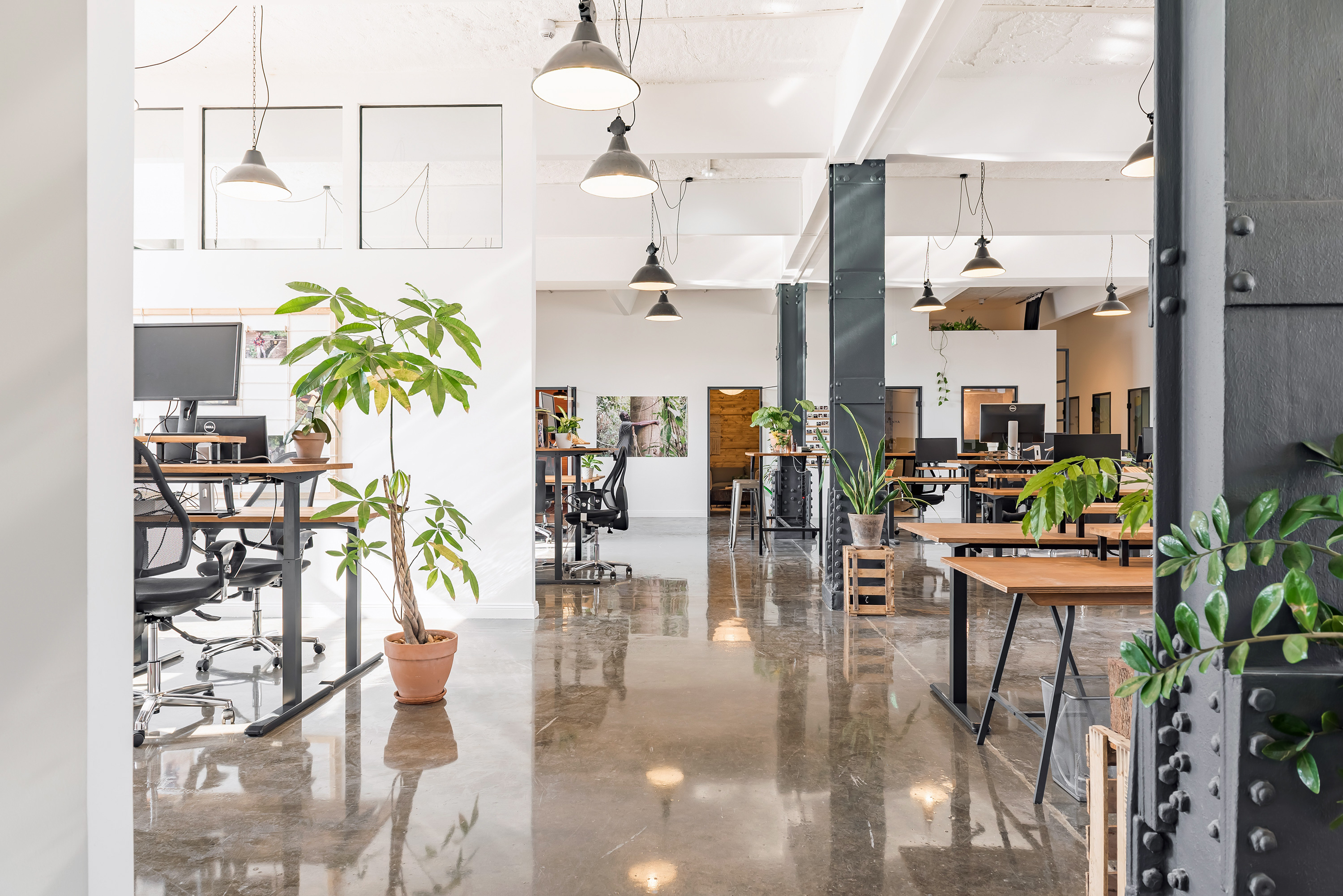 The bright, spacious Ecosia office. Industrial style with a lot of natural light and plants